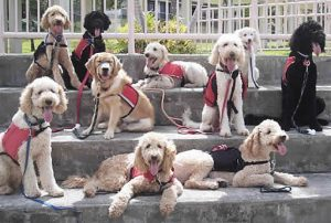 Types of Goldendoodle