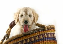 Puppy In A Basket | Puppy Potty Training